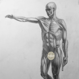Рисунок фигуры Экорше
