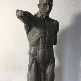 Анатомический торс, Экорше