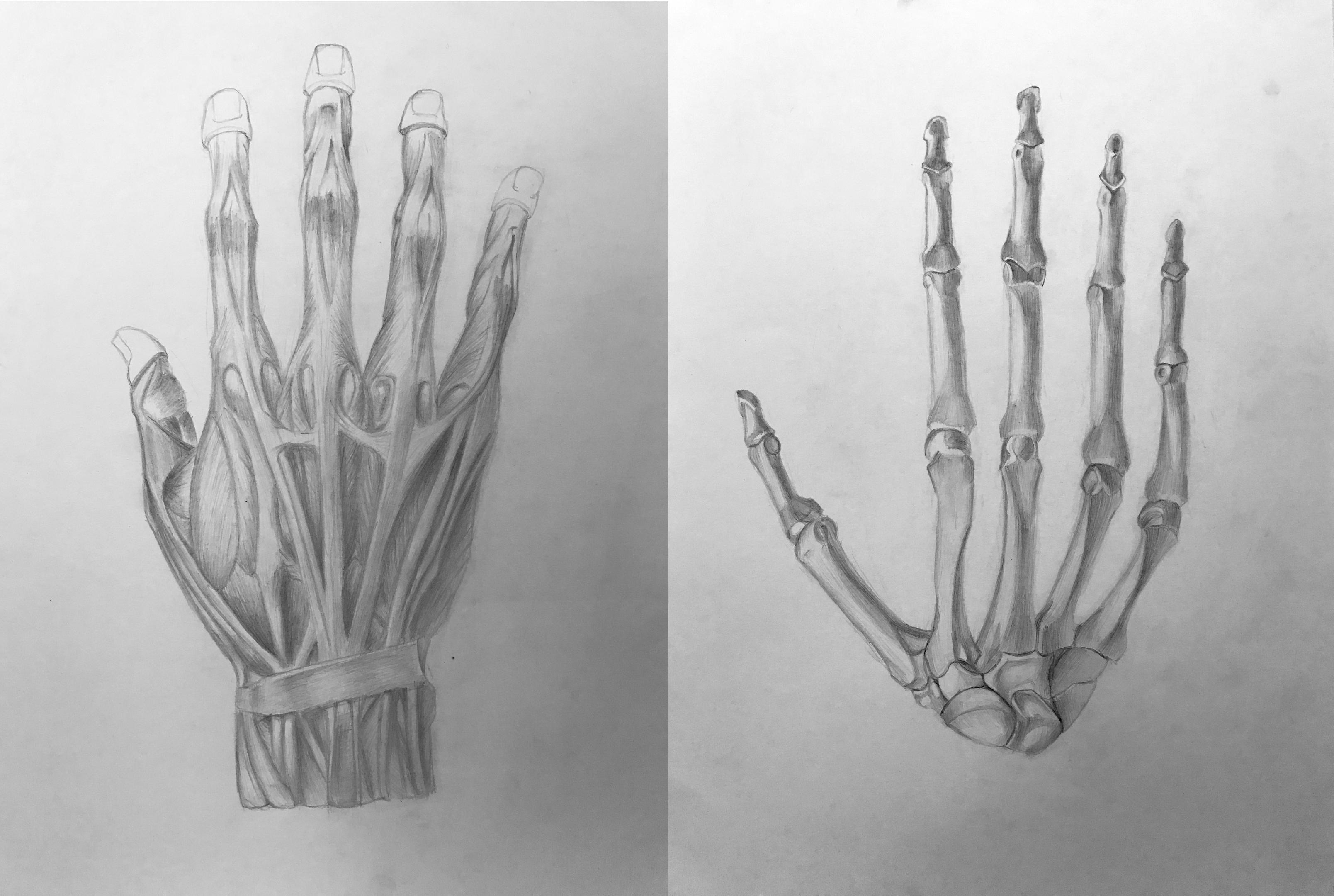 СкелетКисть1