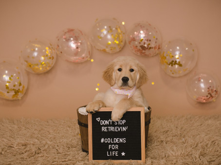 Pooch Portraits! Pet Photographer in Saratoga Springs, Albany, and Ballston Spa