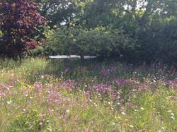 Wildflower meadow west sussex
