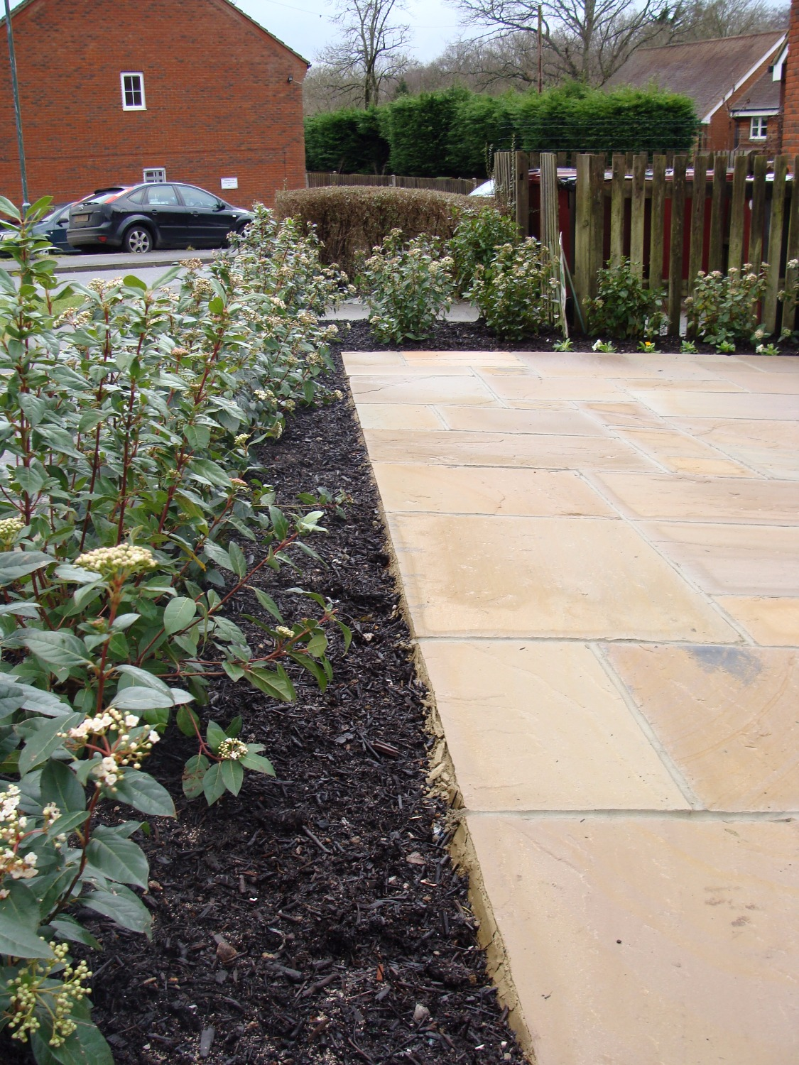 Sandstone paving viburnum hedge