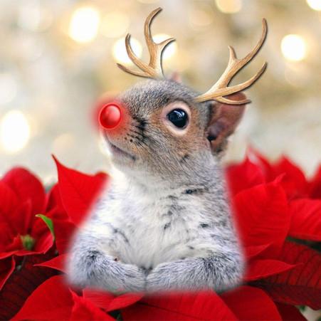 Spunky Tales: Spunky Doodle's Christmas Gathering
