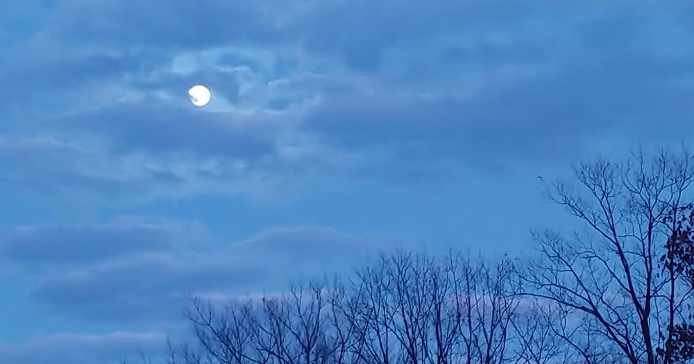 Moonlight at Mustard Seed Sentinel