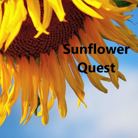 Jo's Journal: Why the Symbolism of Sunflowers Resonated with Me