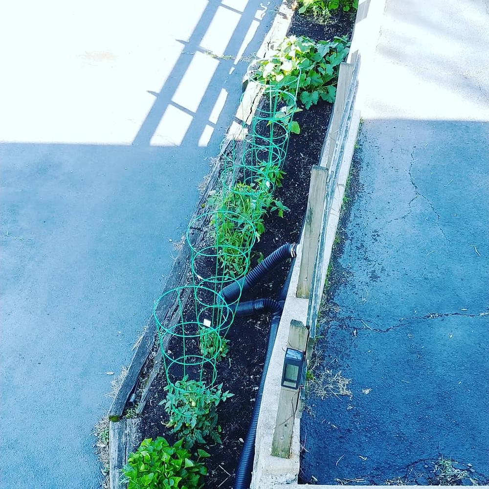Gardening at Mustard Seed Sentinel