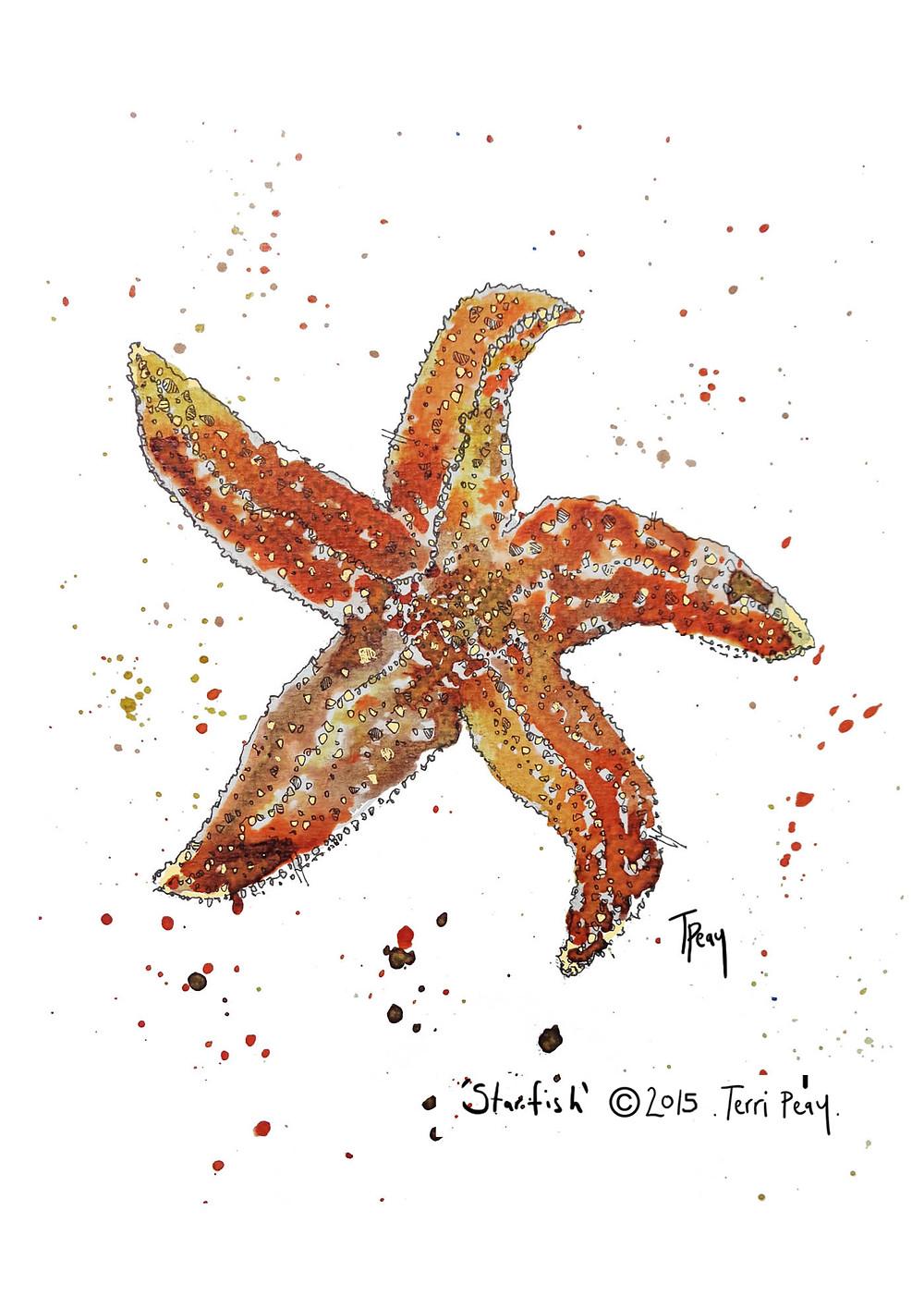 A4 Starfish.jpg