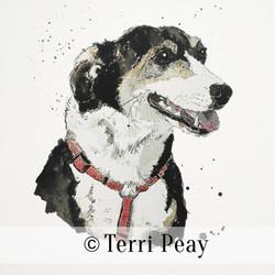 'Murky' By Terri Peay