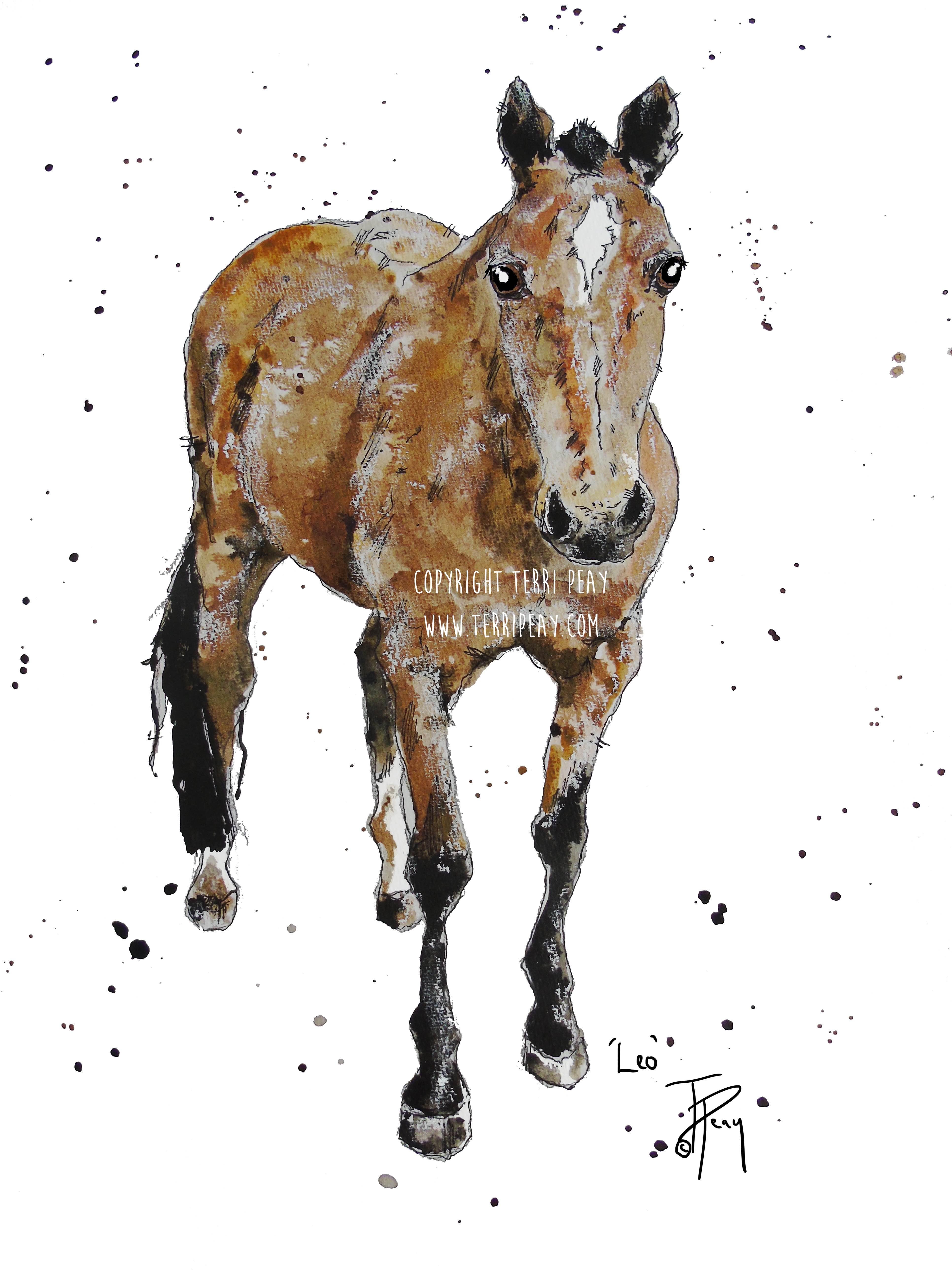 'Leo, Horse' By Terri Peay