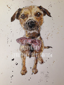 'Border Terrier' By Terri Peay
