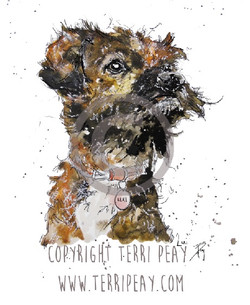 'Lexi, Border Terrier' by Terri Peay