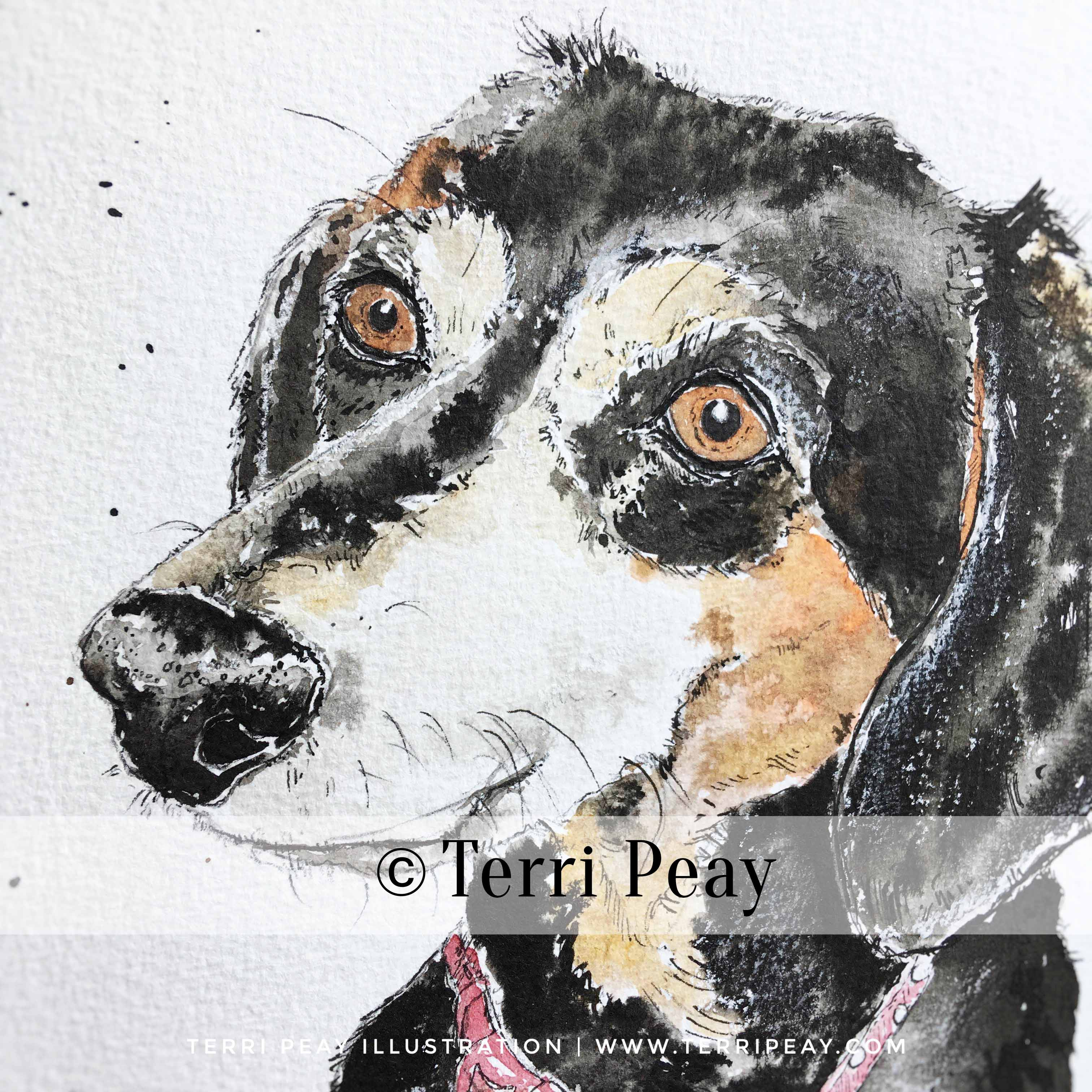 'Dacshund' By Terri Peay