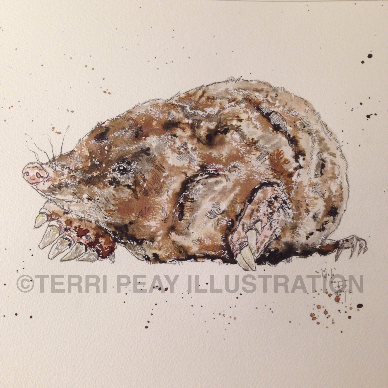'Mole' By Terri Peay