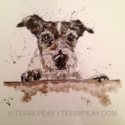 'Harry' Jack Russell By Terri Peay
