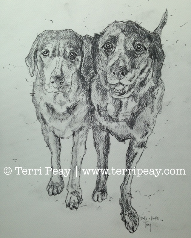 Pencil Sketch By Terri Peay