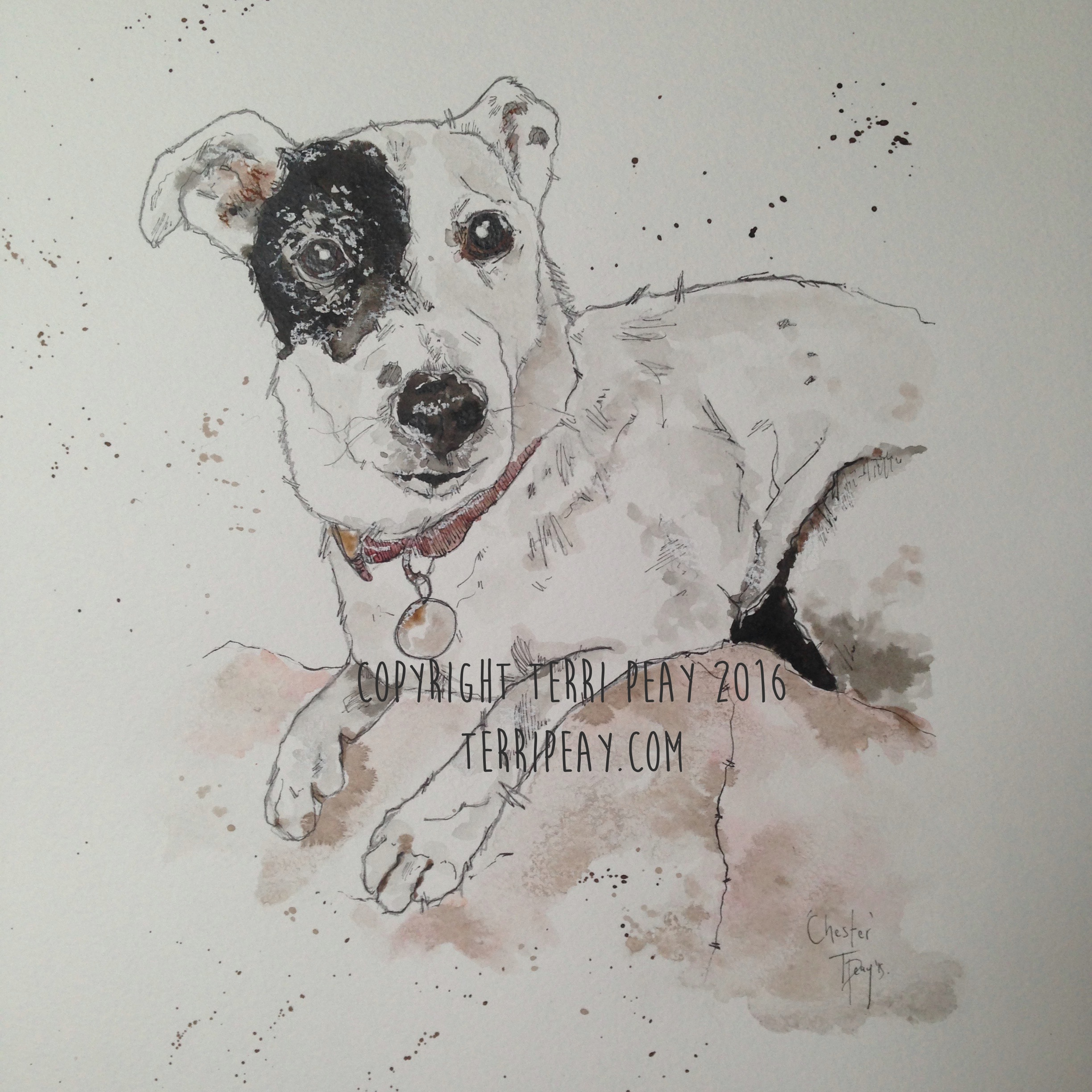 'Chester' By Terri Peay