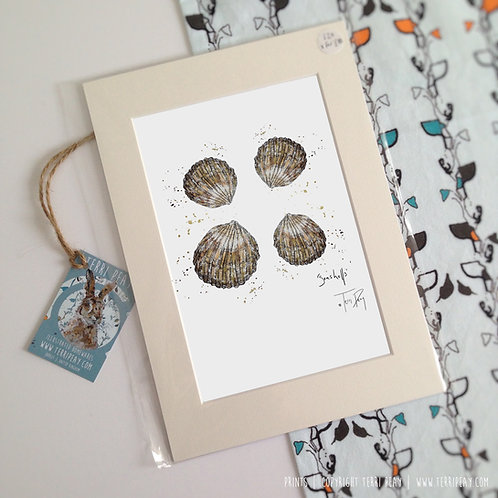 'Seashells' Print