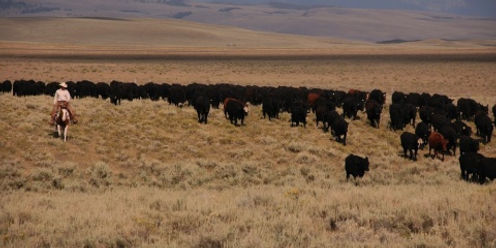 CattleDrives1000-480x240_edited.jpeg
