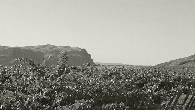 vineyard-bg-6.jpg