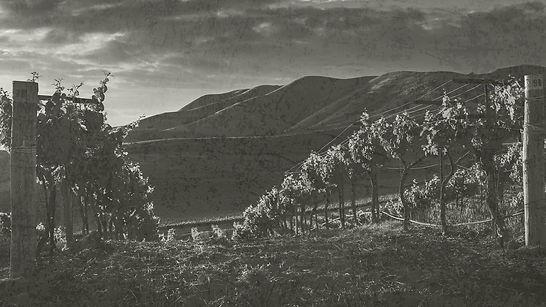 vineyard-bg-4.jpg
