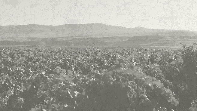 vineyards2.jpg