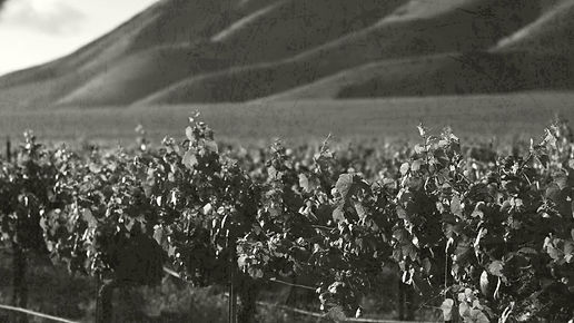 vineyard-bg-5.jpg