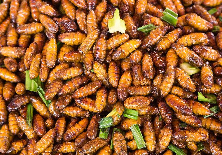 shutterstock_153022106-insectes-comestib