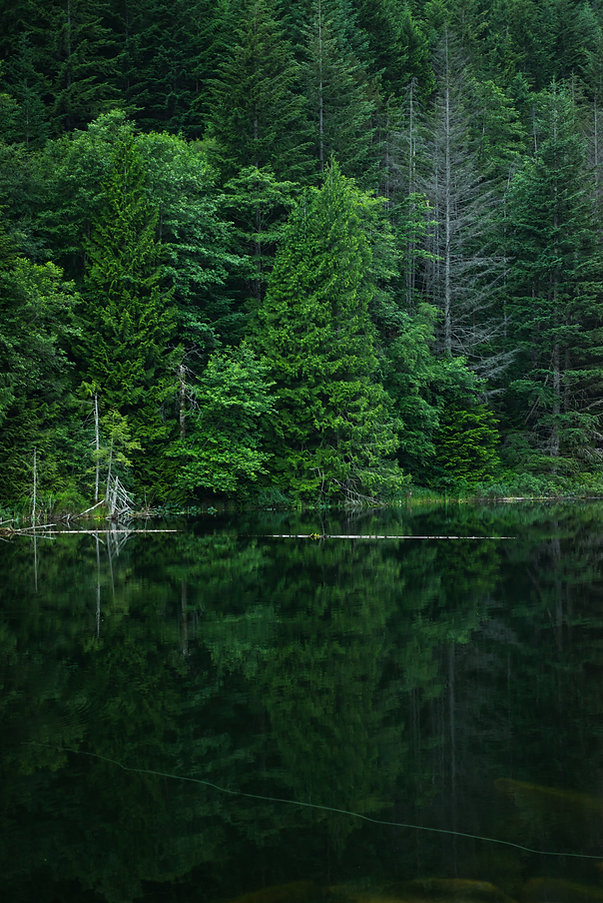 La naturaleza verde