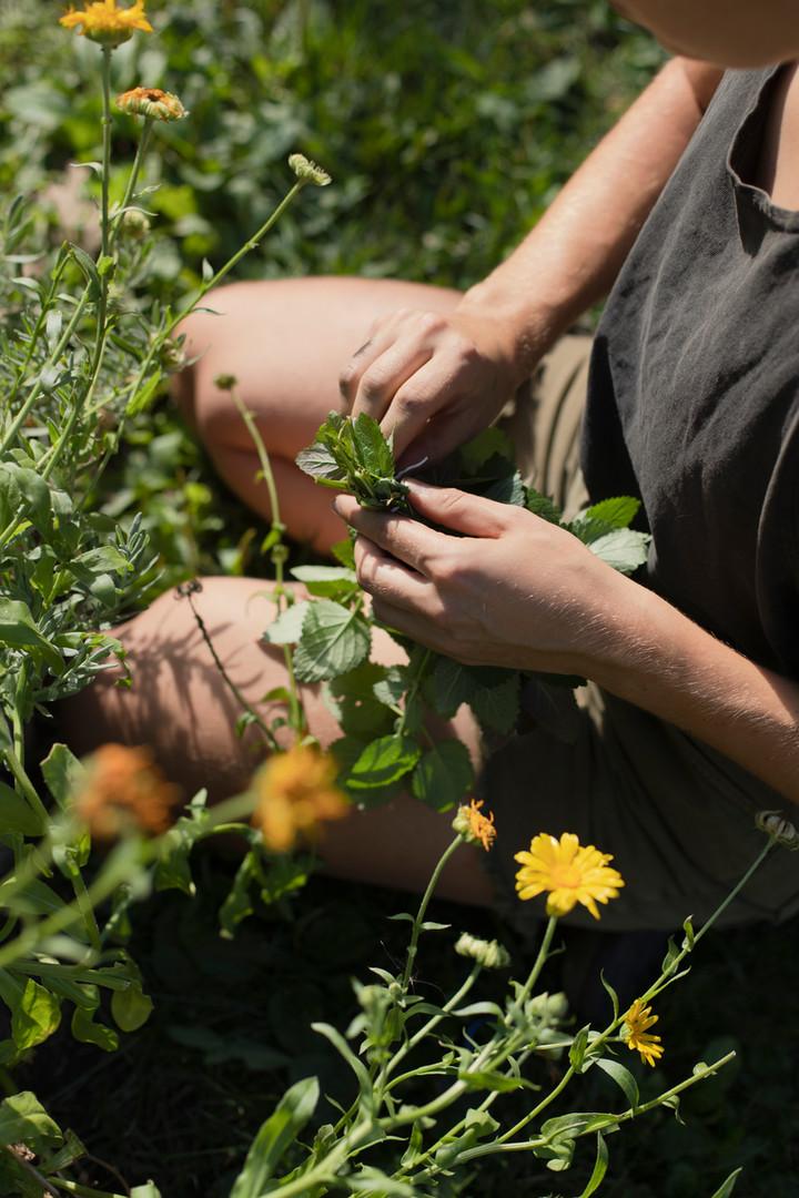 Medicine Kin (Garden)
