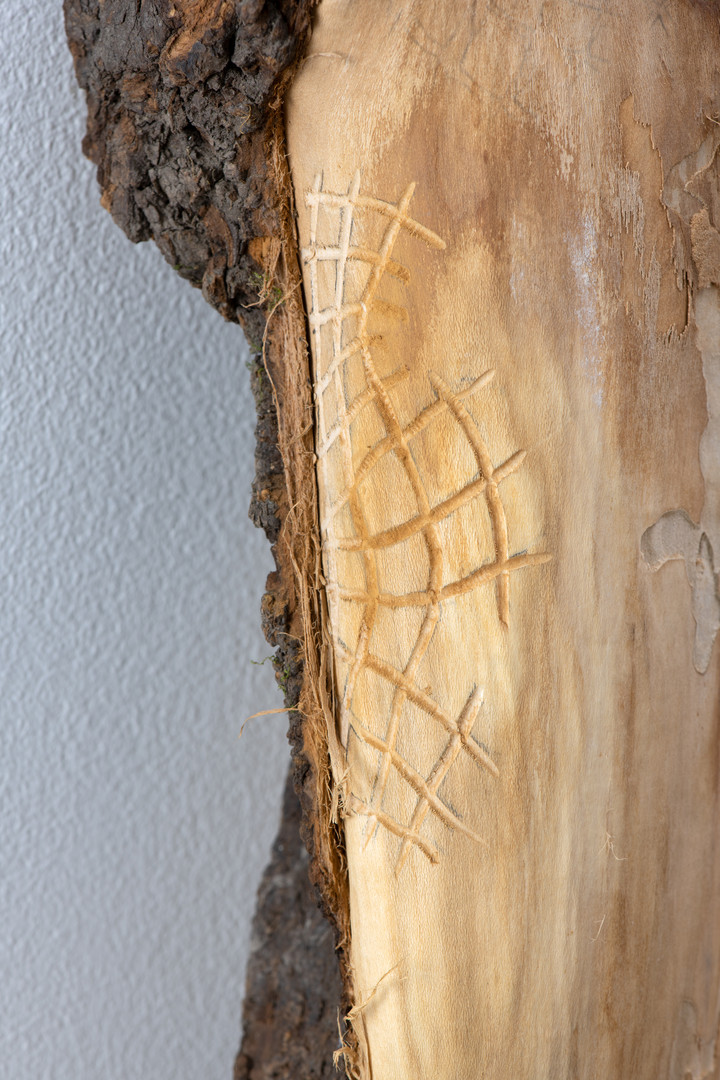 Knots / in collaboration with termites