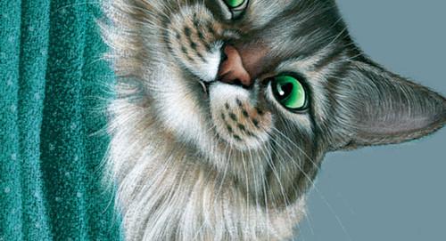 L'avis des libraires - 139ème chronique : Les mémoires d'un chat