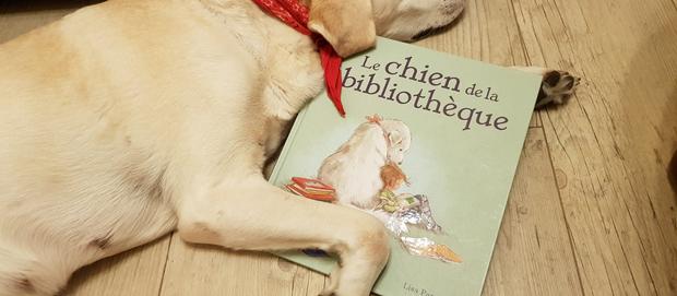Le chien de la bibliothèque #En 3 points