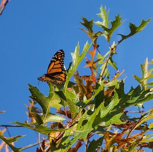 Always a Butterfly.jpg