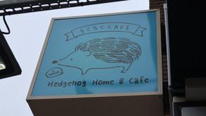 Hedgehog Cafe!