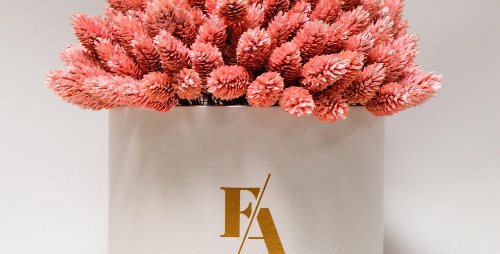 FLOWER BOX SUH - PHALARIS ROZA
