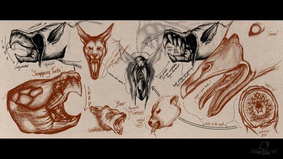 Mouth/Beak Studies