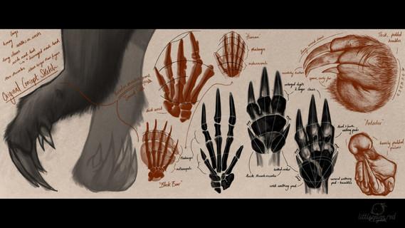 Hand/Paw Studies