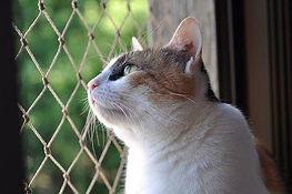 gatos-janela-400.jpg