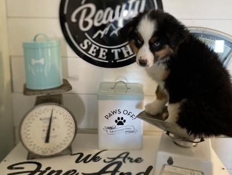 Deciding to Get a Puppy