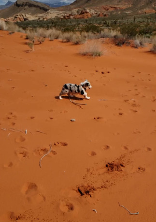 Riley Running in the Sand