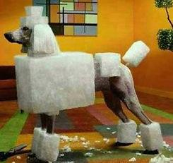 poodle groomed like block