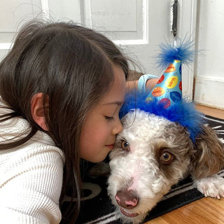 Birthday Party for One of Our Aussiedoodle Puppies