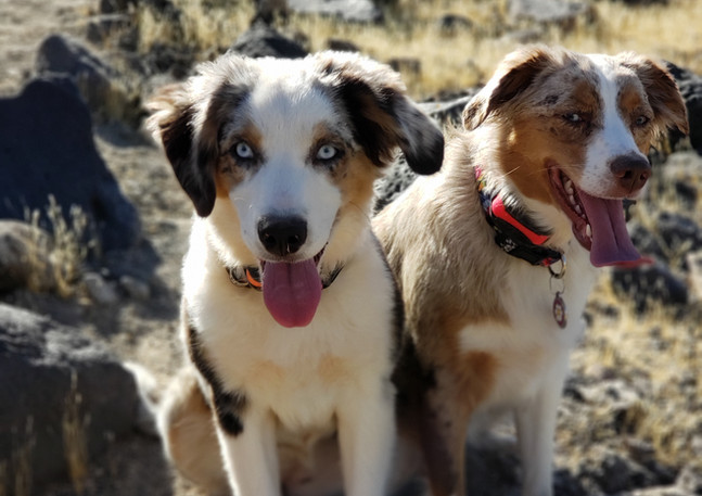 Our Aussies Harper and Riley