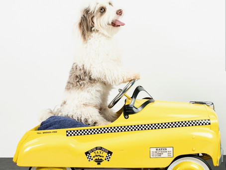 Travel And Picking Up Your Puppy