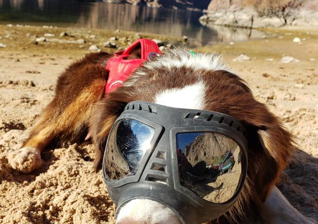 Puppy Sunglasses