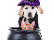 Trick or Treat for the Furry Friends