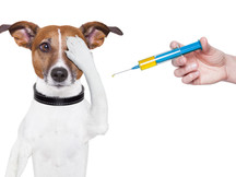 Low-Cost Vaccine Clinic This Weekend