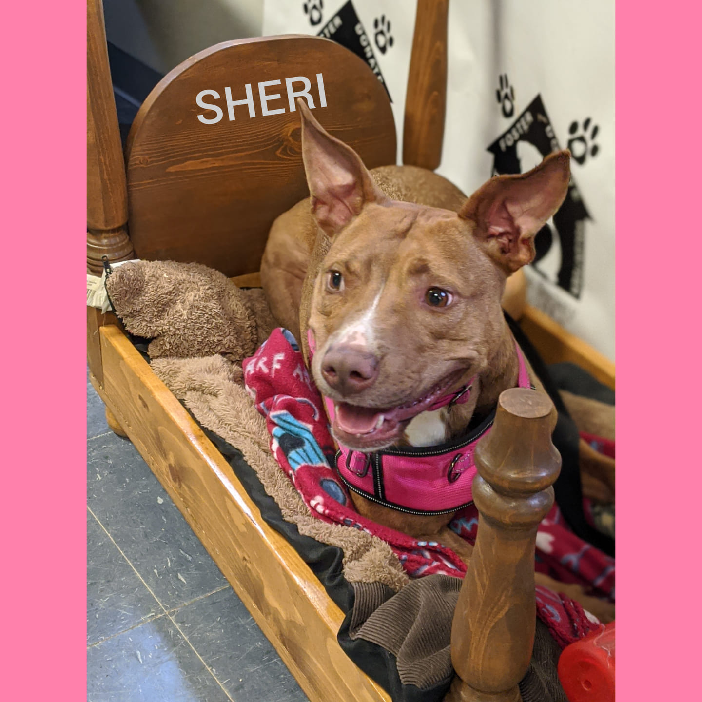 Check out all the great pets up for adoption