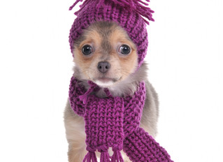 Protect Your Pet from Cold Weather