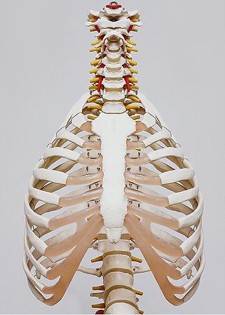 Osteopath North London